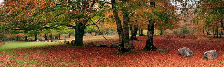Bosque en Otoño Sierra Urbasa Navarra