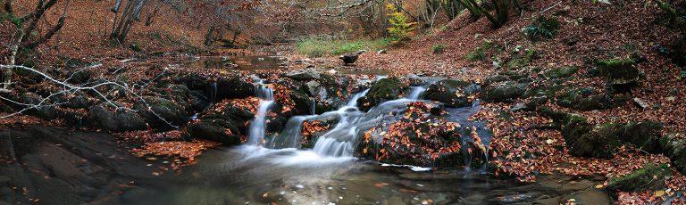 Regata Rio Erlan en la Selva de Irati Navarra