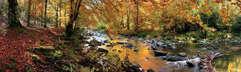 Rio Dorado en Otoño Selva Irati Navarra